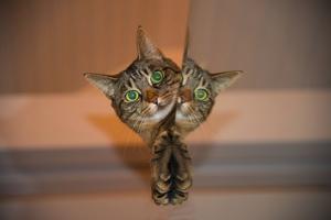 猫中毒.jpg