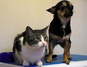 プロバイオ犬猫.jpg